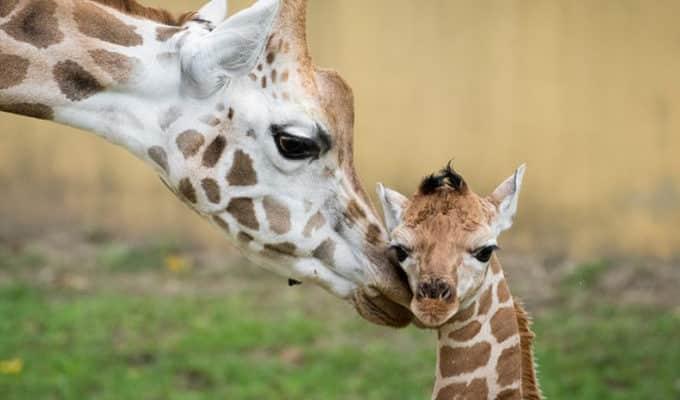Idén közel 200 állatkölyök született az egyik hazai állatparkban
